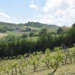 Tenuta Costa da Sole uitzicht wijnranken