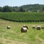Prachtig uitzicht met de hooibalen en wijnranken in Frankrijk