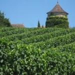 Prachtige wijnvelden in Frankrijk