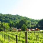 De wijngaarden met uitzicht op de safaritenten van Villa La Diva