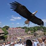 Schitterende roofvogelshow in de Vendée
