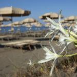 Ligstoelen op strand bij camping Capalbio