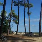 Ile d'Oleron bossen en fietspaden