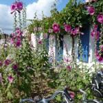 Les Pins bloeiende bloemen