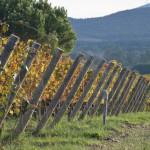 Tenuta Poggiorosso wijngaarden