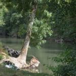 Rivier Loir - vissen