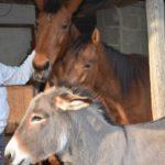 Paarden Ezedra en Winstorm samen met ezel Merlino op Tenuta costa da sole