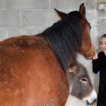 Paarden knuffelen op Tenuta costa da sole