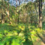 Du Bois de St. Hilaire de bossen in omgeving
