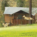 Cerza Safaritenten met uitzicht op de dieren