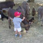 Camping Lou Pignada kinderboerderij