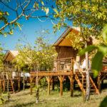 Lodge tussen olijfbomen Pian di Boccio