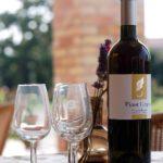 Tenua Regina eigen wijnhuis