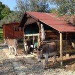 Kleiner Bauernhof auf dem Campingplatz San Marino