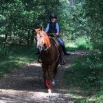 Paardrijden in de omgeving van Vakantiepark De Pier